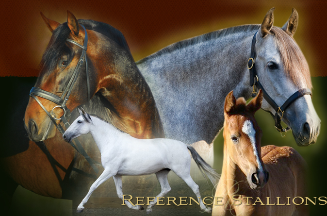 Reference Stallions